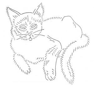 wb-cat4