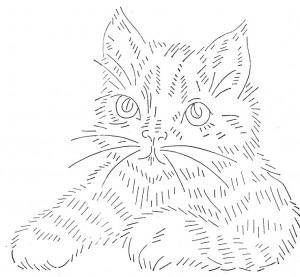 wb-cat6